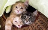 Belgique : Stérilisation obligatoire pour contrer la surpopulation des chats ?
