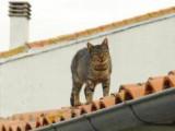 Ars-en-Ré. L'affaire d'État des chats errants