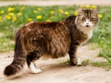 L'avortement de la chatte : méthodes, coût, risques...