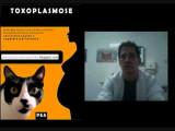 Toxoplasmose : un nouveau traitement « extrêmement efficace » à l'essai