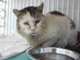 L'anémie du chat : causes, symptômes, traitement...