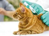 La vaccination pour un chat