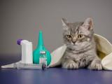 La gastro-entérite chez le chat