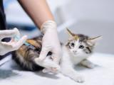 Quels sont les vaccins indispensables pour votre chat ?