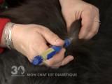 Comment soigner un chat diabétique