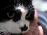 L'épilepsie chez les chats