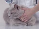 Maladie du chat: le coryza