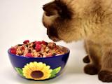 Mon chat mange n'importe quoi ou n'importe comment