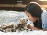 Les zoonoses, maladies du chat transmissibles à l'Homme