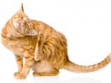 Comment protéger son chat contre les parasites?