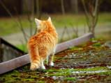 Vermifuge pour chat : pourquoi et comment vermifuger son chat ?