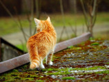 Vermifuger son chat