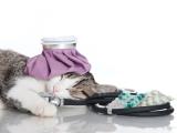 Canada -  Un ignifuge pourrait rendre les chats et les enfants malades