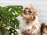 Les plantes toxiques et nocives pour les chats