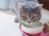 Eau, lait... : quelle boisson donner à boire à son chat ?