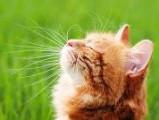 12 conseils pour augmenter l'espérance de vie de son chat