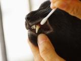 La santé de votre animal passe aussi par ses dents