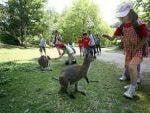 Un dentifrice pour  kangourous et...pour chien et chats