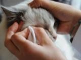 Lotion pour le nettoyage des yeux pour chien ou chat