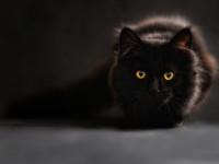 Le chat est d'un tempérament chasseur