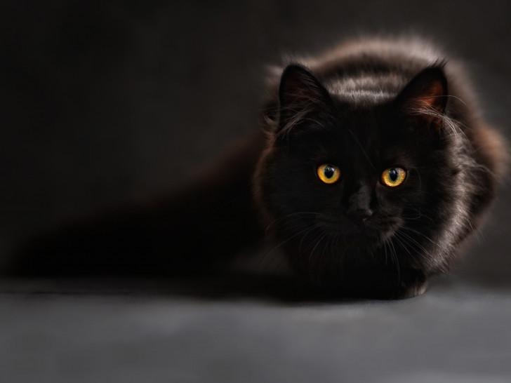 jouets pour chat stimuler son chat avec le jeu. Black Bedroom Furniture Sets. Home Design Ideas