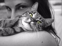 Les soins à donner au chaton