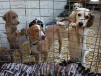 Avant l'adoption d'un animal en refuge