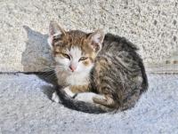 J'ai trouvé un chaton ou des chatons à l'abandon