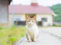 J'ai trouvé un chat abandonné adulte qui semble en bonne santé