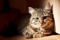 1. Un chat au caractère déjà défini