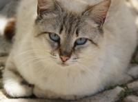 2. Un chat à l'apparence adulte
