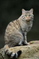 4. Un chat plus indépendant