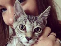 Votre mode de vie est-il compatible avec celui de votre chat ?