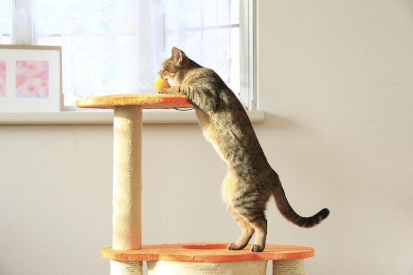 accueillir et vivre avec un chat adulte. Black Bedroom Furniture Sets. Home Design Ideas