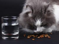 L'alimentation du chaton