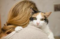 Les différences de comportement du chat