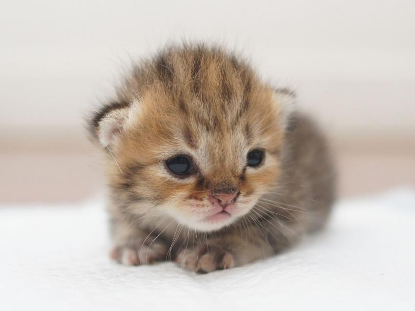 Assez Arrivée d'un chaton à la maison : préparer son environnement BH64