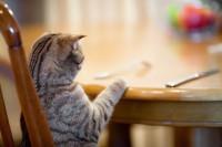 Que dois-je donner à manger à mon chat ?