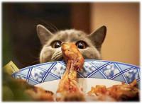 Une nourriture adaptée au poil du chat
