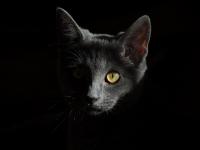 Où trouver des informations sur les assurances pour chats ?