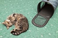 Avant le départ : habituez votre chat aux transports