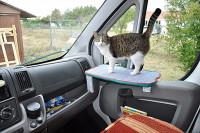 Préparer l'espace du chat dans le camping-car