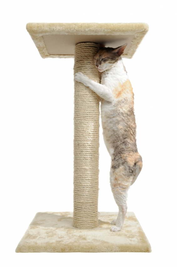 Les griffes du chat - A quel age couper les griffes d un chat ...