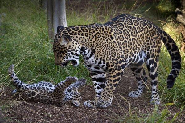 la reproduction chez les chats pdf