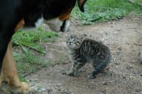 Le chat et le chien s'expriment différemment