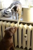 Les codes de communication du chien et du chat sont différents