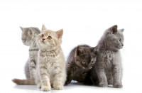 Comportement et éthologie du chat