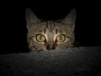 Le chat est noctambule