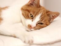 Malpropreté du chat et maladie
