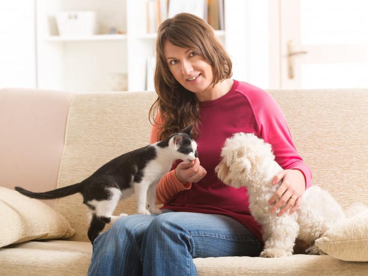 La première rencontre entre un chien et un chat
